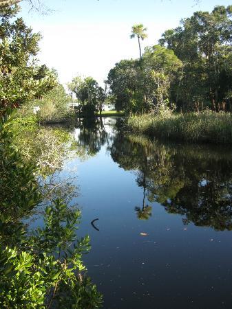 James E Grey Preserve: The river again