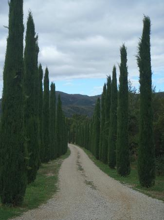 Casa Portagioia - Tuscany Bed and Breakfast: Villa Driveway