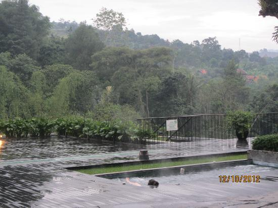 Padma Hotel Bandung: pool view