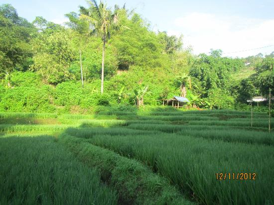 Padma Hotel Bandung : crossing paddy fields during the free trekking session