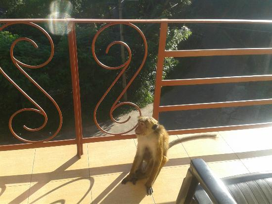 Nature Walk Resort: Monkey outside our window