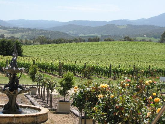 Yarra Valley Private Winery Tours: A wonderful lunch at a winery was part of the package...
