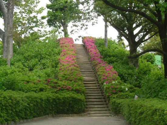 Otsuka Tomb: 2012年5月 古墳の頂上への階段