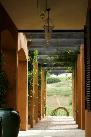 La Residence : The walkway to the olive grove and vineyards.