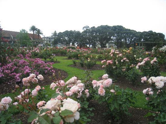 Parnell Rose Gardens: Parnell Rose Garden