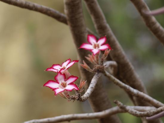 Naledi Bushcamp and Enkoveni Camp: unexpected flora