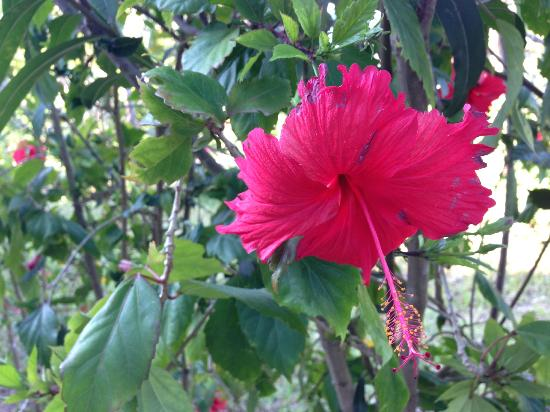 Samaki Lodge & Spa: Pretty flower in front of our room