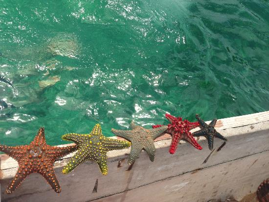 Samaki Lodge & Spa: Starfish found 100 feet out on the water from the shore of the beach