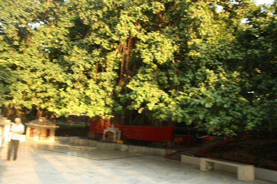 Akshaya Vat