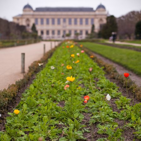 Picture of menagerie du jardin des for Plantes du jardin