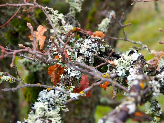 Columbia Gorge Scenic Highway: This stuff grows everywhere, sorry for the technical term....