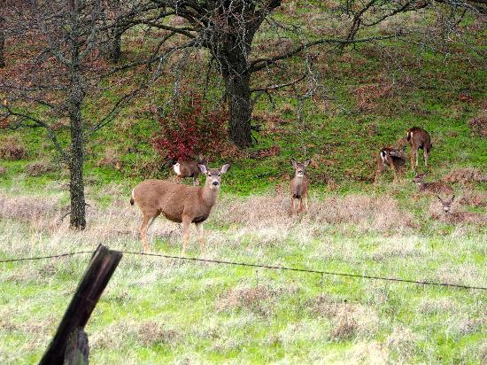 Columbia Gorge Scenic Highway: Local crowd