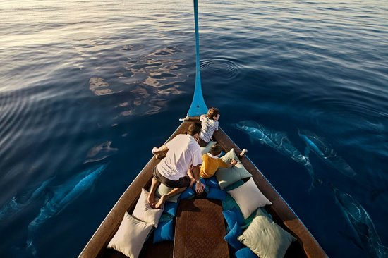 Four Seasons Resort Maldives at Kuda Huraa: Dolphin Cruise