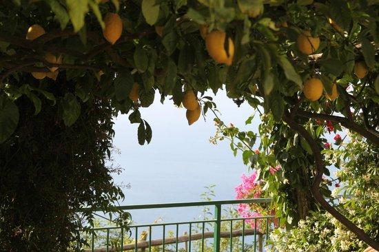 Ravello Rooms: громадные лимоны оставили пару шишек на моей голове
