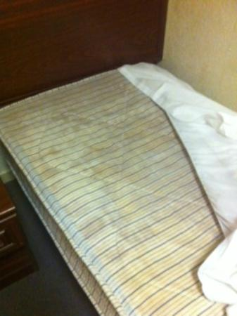 Bayswater Inn: After sleeping one night I noticed the mattress was covered in mold