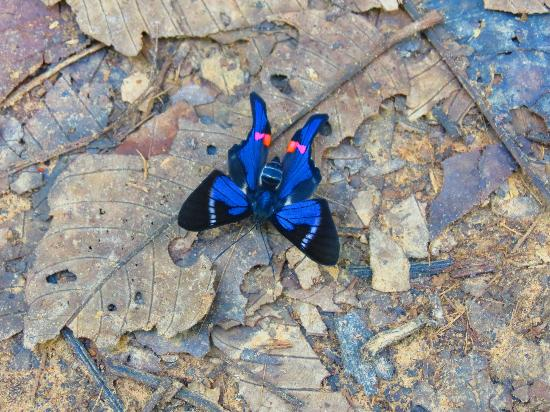 Refugio Amazonas: Beautiful Butterfly