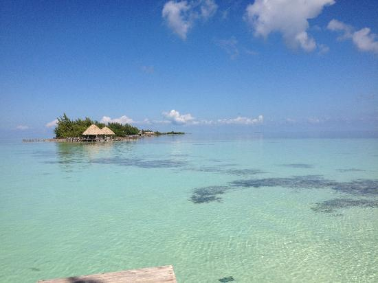 Thatch Caye Resort : Crystal Clear Water