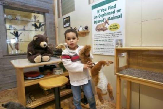 Hands On Children's Museum: Animal Rescue clinic in Our Fabulous Forest gallery