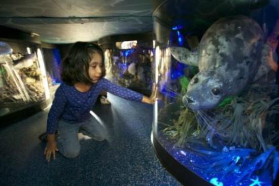 Hands On Children's Museum : Tunnel in Our Puget Sound gallery