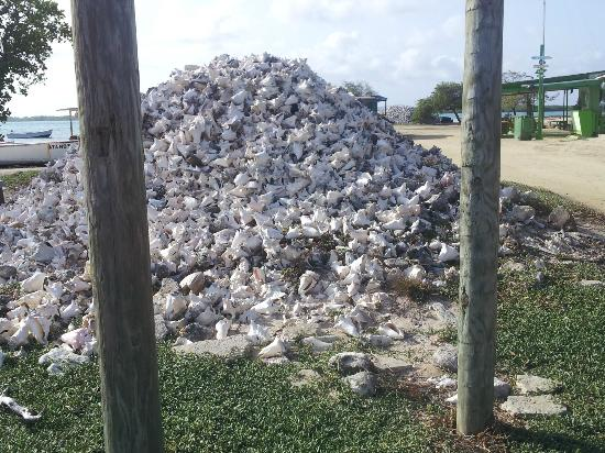 Bruce Bowker's Carib Inn: Pile of conch shells - not on Carib Inn property
