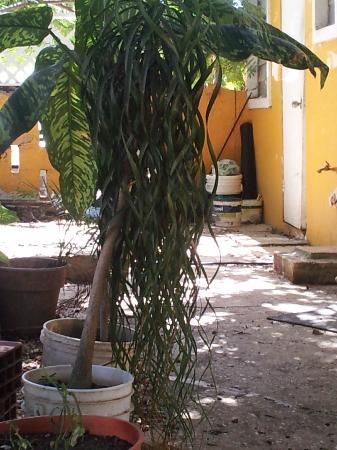Rose Inn: Cool looking plant