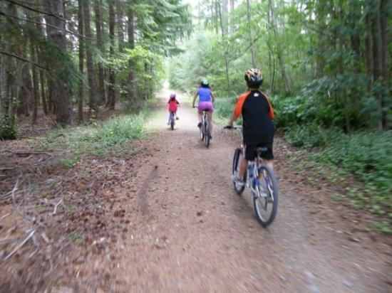 Hot Springs Motor Lodge: Mountain biking in Hanmer forest
