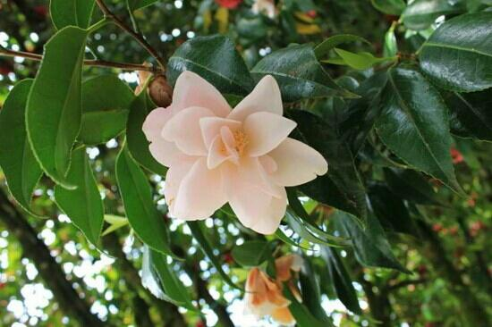 Hulda Klager Lilac Gardens: L