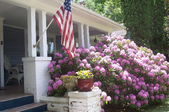 Inn on Main Street B&B: May rhododendrons