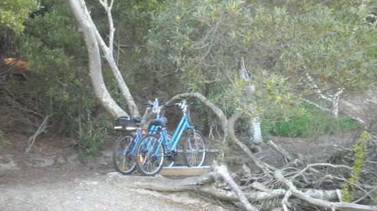 Wheelie Fantastic Cycle Hire & Tours: Bike Stop on Rabbit Island, Mapua