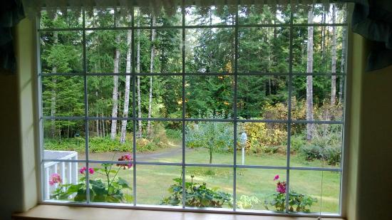 A Hidden Haven Bed and Breakfast: Looking out living room window