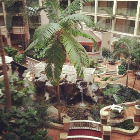 Sheraton Suites Cypress Creek Ft. Lauderdale: Central Garden Area As Seen From the Glass Elevator