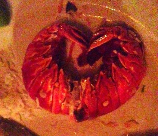 เนวิส: lobster.... a...ma....zing!