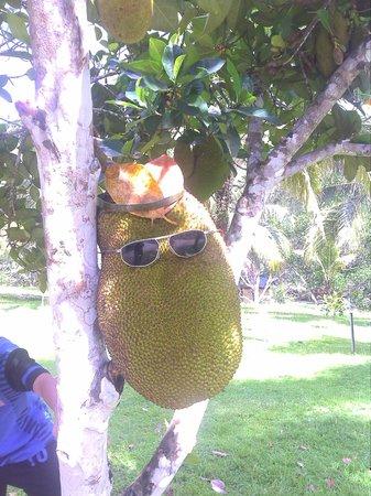 MARDI Langkawi Agro Technology Park: nice