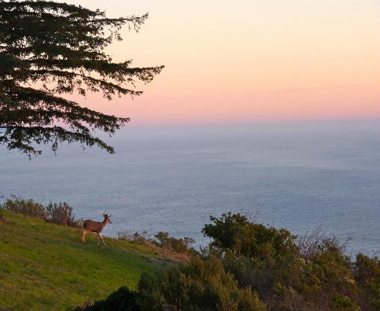 Post Ranch Inn: Deer at sunset 