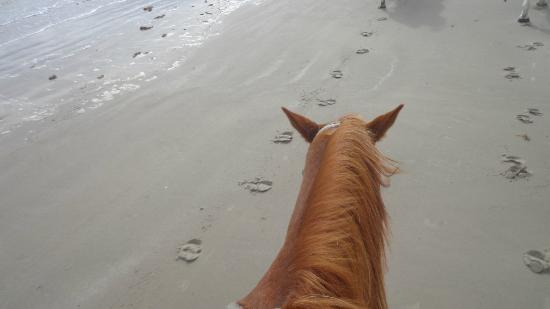 Horses On The Beach: I took this of my horse as I was riding