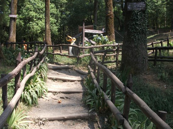 Dhanaulti India  City pictures : Dhanaulti, India: Eco Park