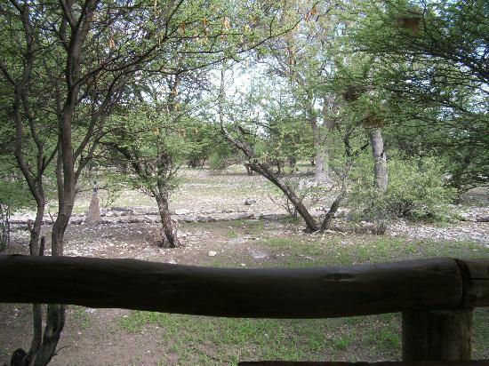 Thakadu Bush Camp: View from chalet