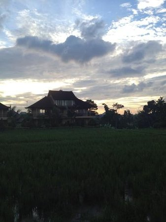 Sri Bungalows: padi field view in 7am