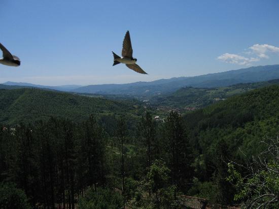 Agriturismo Borgo Tramonte: Le nostre amiche rondini