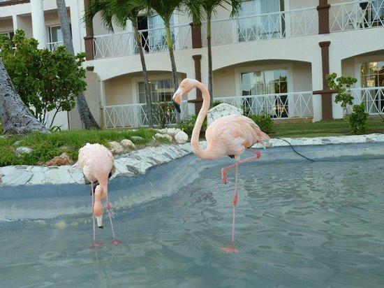 """Be Live Collection Punta Cana: """"Inolvidables vacaciones"""""""
