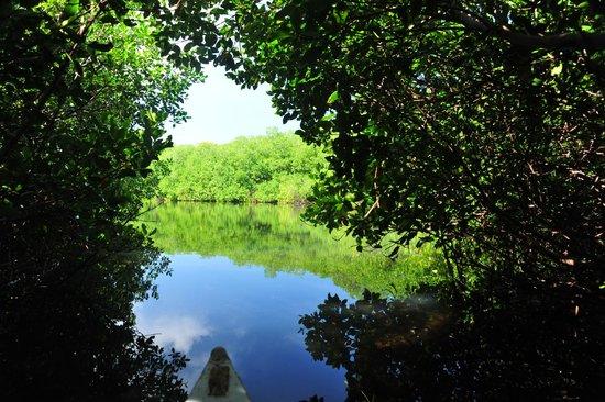 Tours en Islas del Rosario: manglares Isla Grande