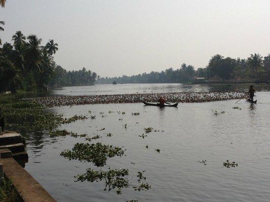 Thevercad Alleppey Homestay: Duck Herding