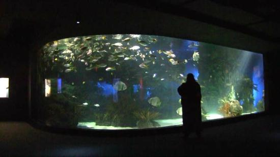 Ripley's Aquarium of the Smokies: Main Tank Viewing