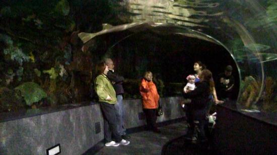 Ripley's Aquarium of the Smokies: Walk Through Tank