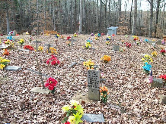 Key Underwood Coon Dog Memorial Graveyard: numerous gravesites