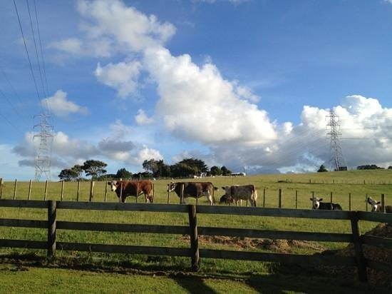 Pakinui Farmstay and B&B: Beautiful green expanse