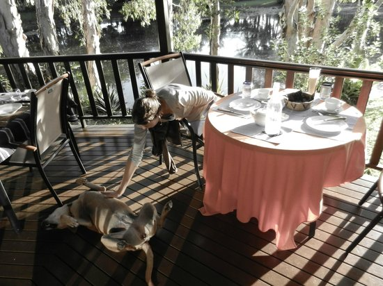 Billabong Bed & Breakfast: Breakfast time with the house dog