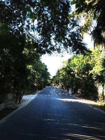 Yoga Shala Tulum: early morning traffic out front....none! :)
