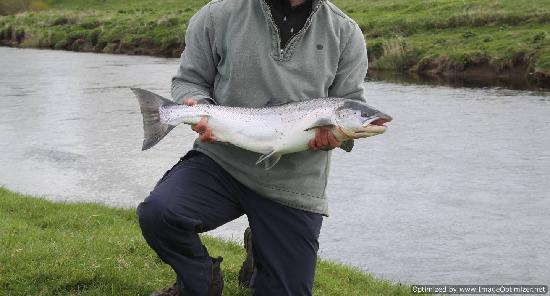Hamilton, UK: Salmon Fishing in Scotland