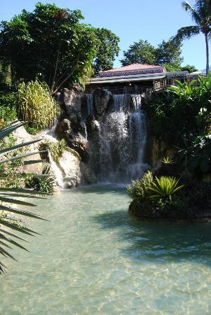 Flamant rose photo de jardin botanique de deshaies for Restaurant jardin botanique